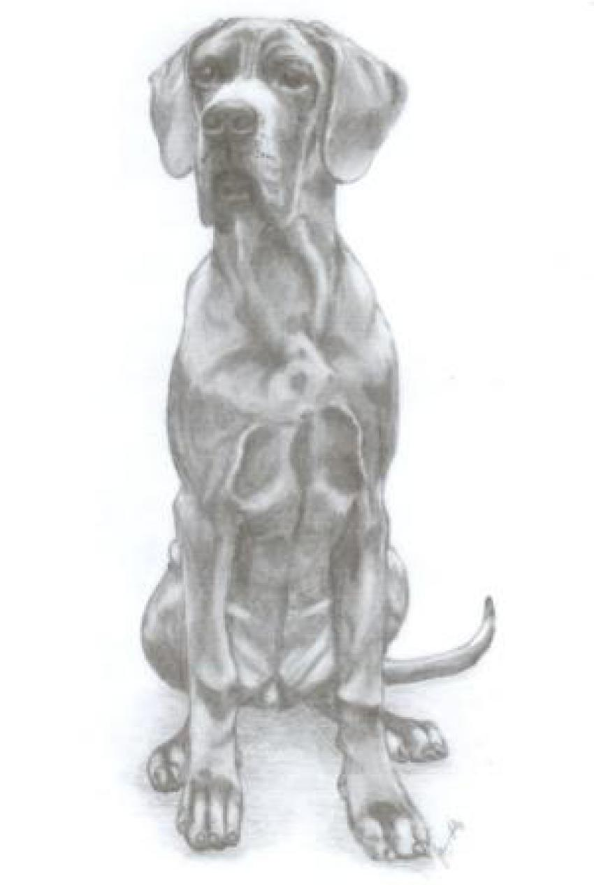 Baghira - kresba tužkou 21.9.2012-autor majitelka psa p.Balážová Jana