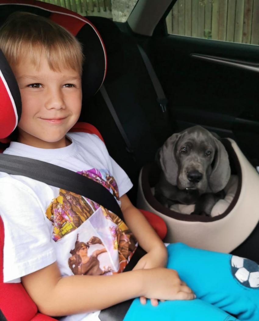 Náš modrý miláček Charlie při odjezdu do rodiny p.Hörla