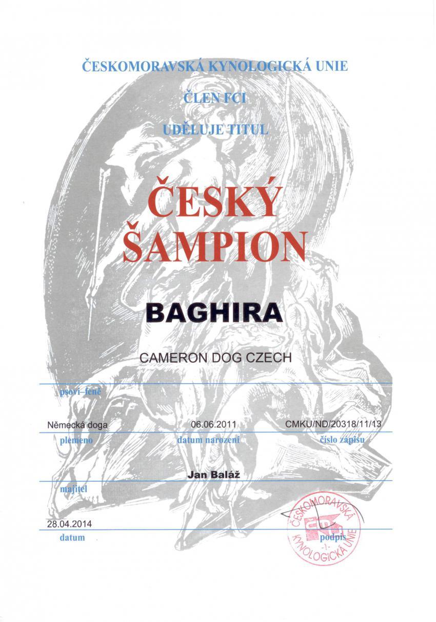 Baghira-Český šampion