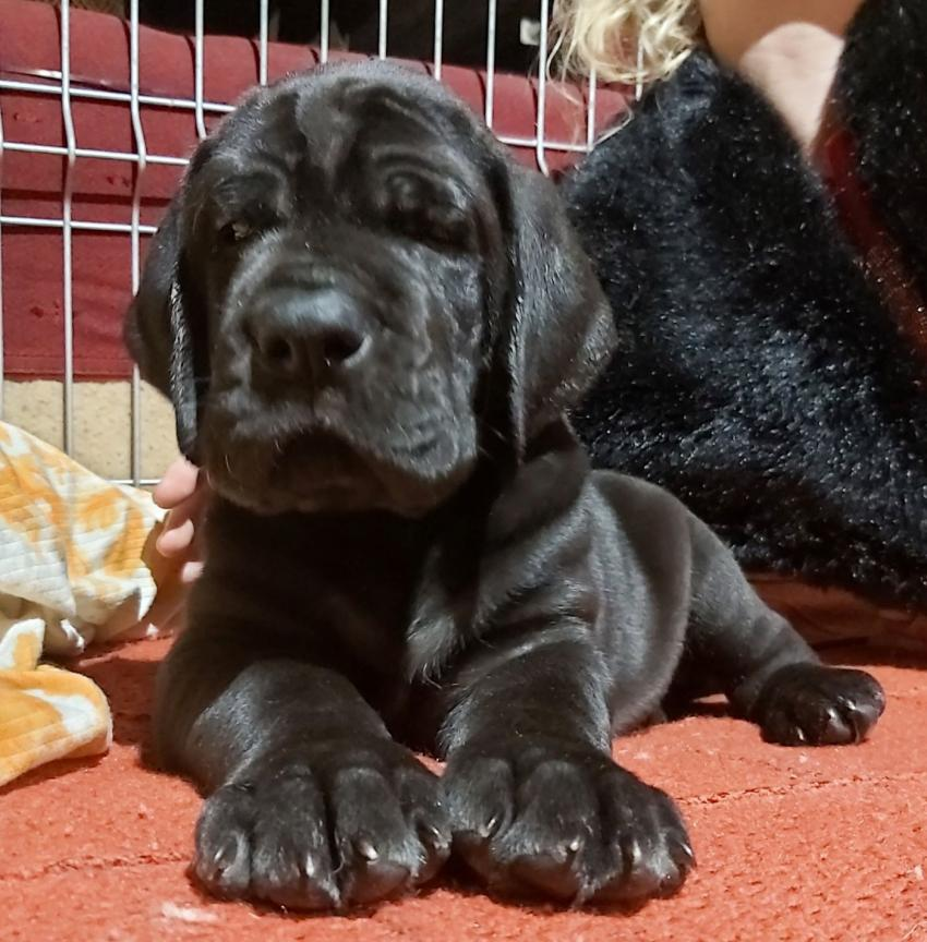 Iron dog 5 týdnů 1
