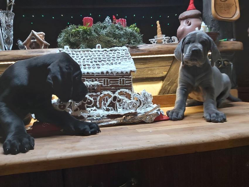 Isis Luna a Iron Dog vánoce 2020