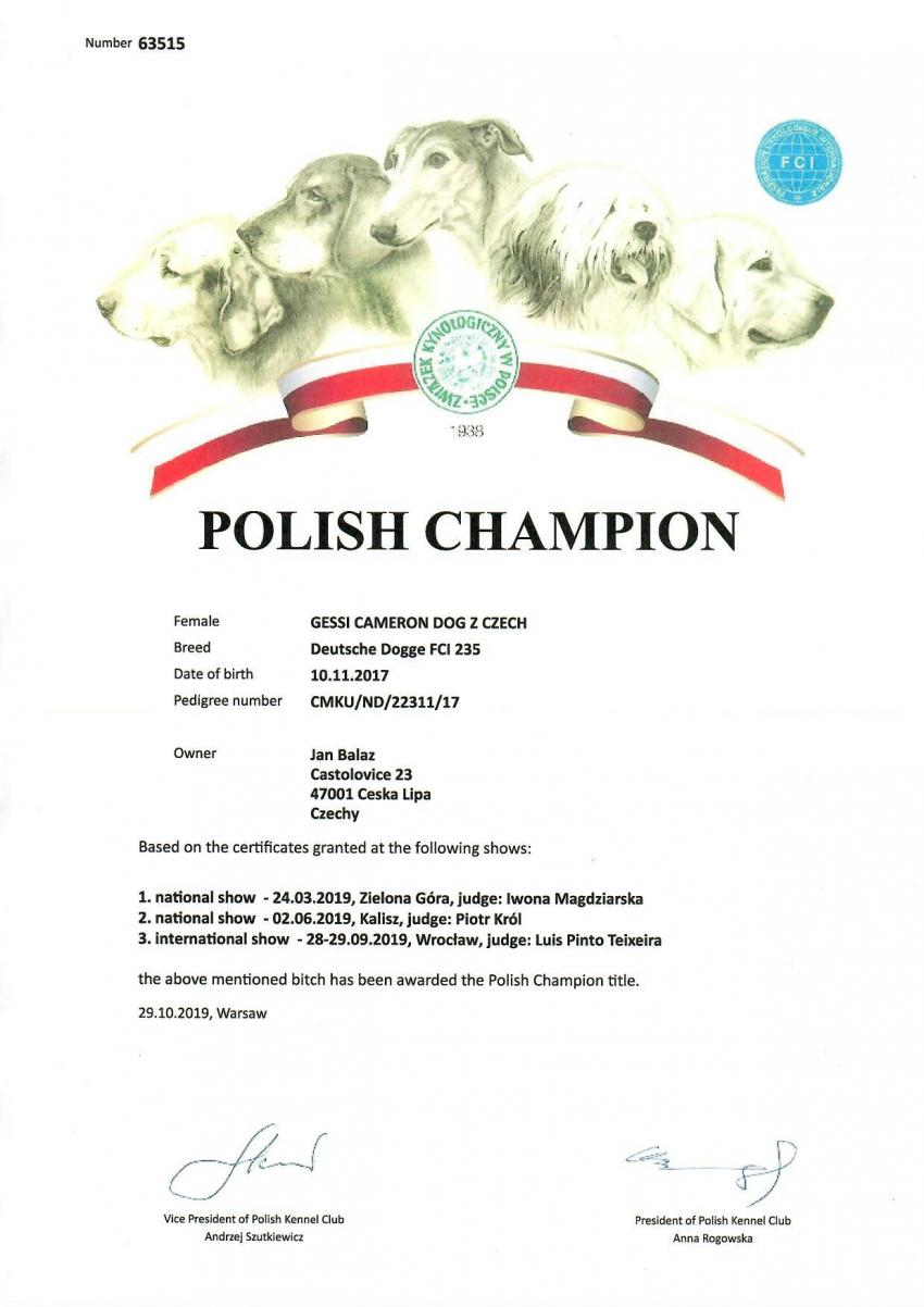 Polish Champion Gessi Cameron dog Czech