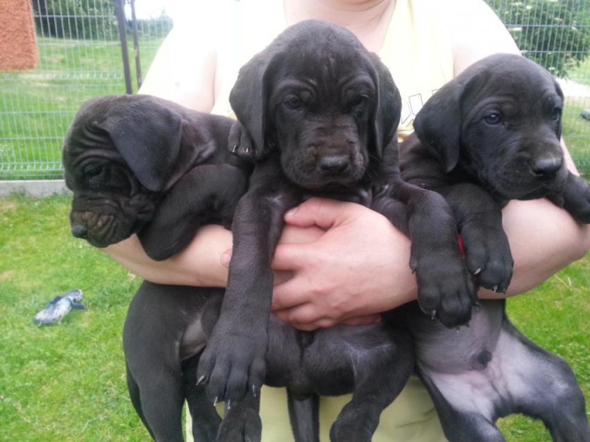Tři černí kluci